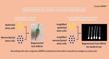 The Future of Regenerative Medicine for Hair Follicles   October