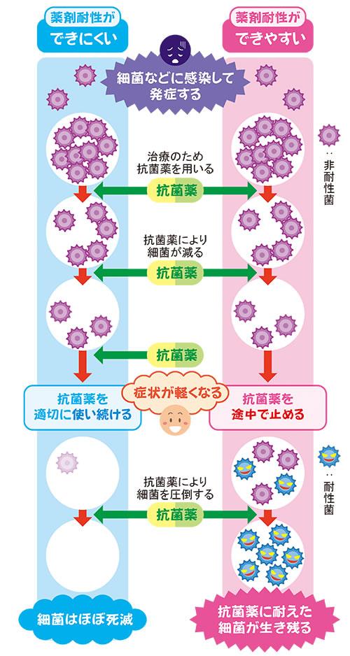 抗菌 薬 種類